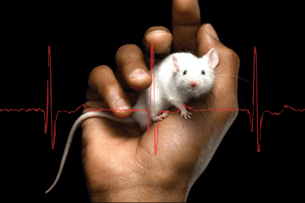 Improving Rodent Cardiovascular Research Outcomes with Integrated Surgical Monitoring