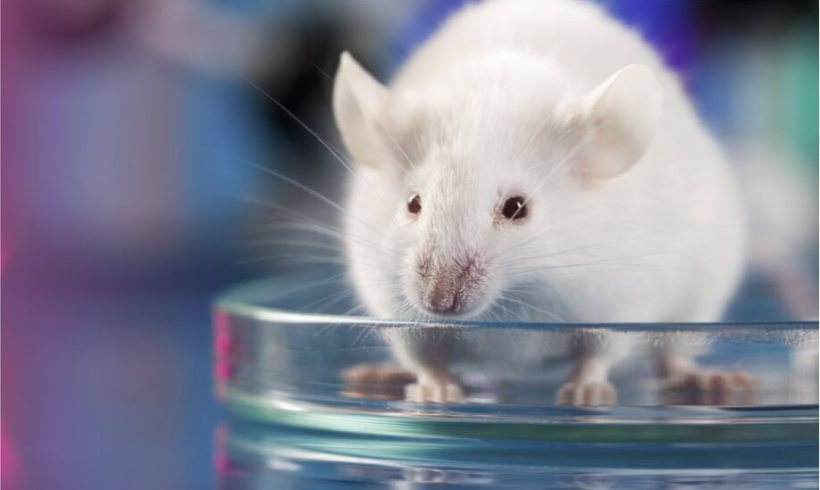 Measuring Long-Term, Wireless EEG in Rodents using Epitel-Epoch and BIOPAC Systems