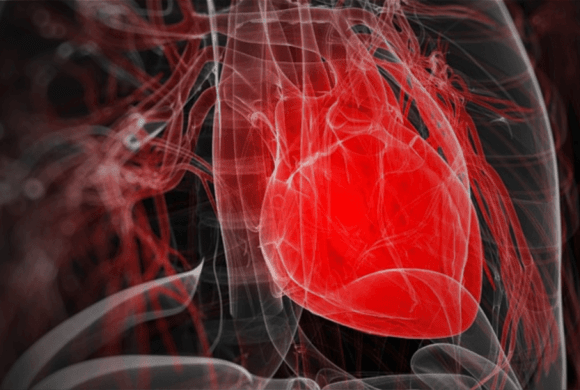 Combining Telemetry and Ultrasound for Serial Investigation of Cardiovascular Function in Rats