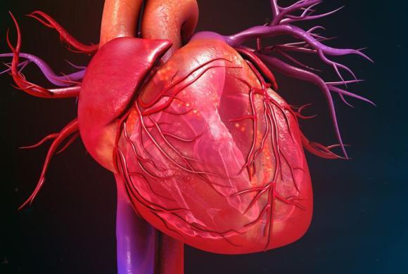 Dan Burkhoff, MD PhD, Presents The Fundamentals of Cardiovascular Physiology and Hemodynamics [PART 1 & 2]