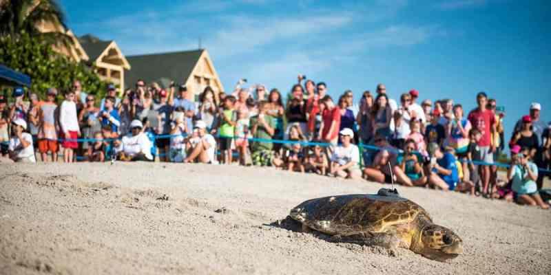 Tour de Turtles
