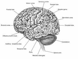 brain | Inside the Mind of an Aspie