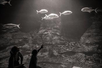 sturddlefish