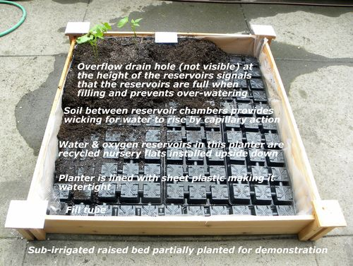 Inside Urban Green Sub Irrigated Raised Beds At The