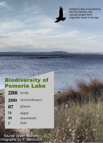 pomorie lake sandwich terns 1