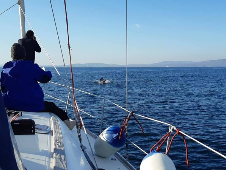 counting dolphins in the black sea 25 2