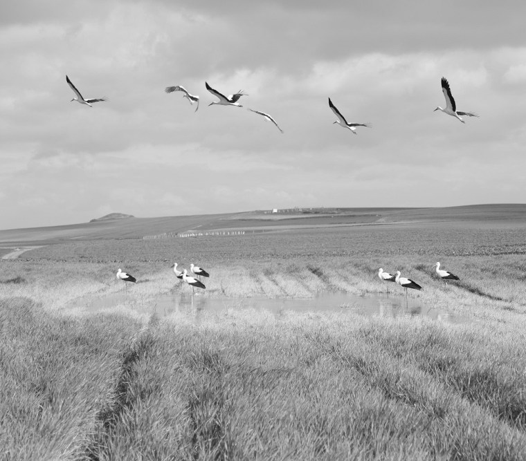 storks atanasovsko lake