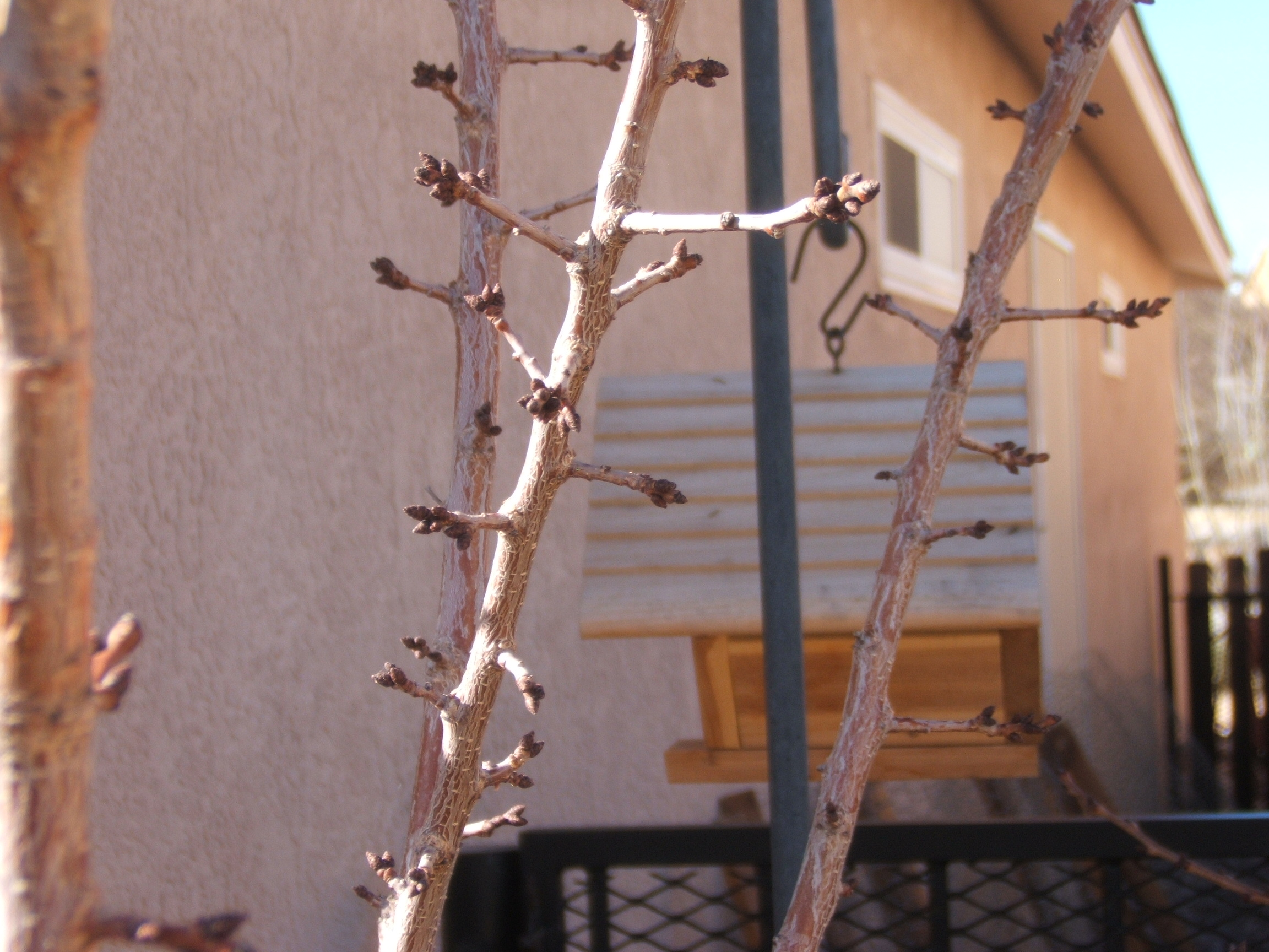 Apricot and Bird House