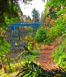 Reed College Bridge over Wetlands