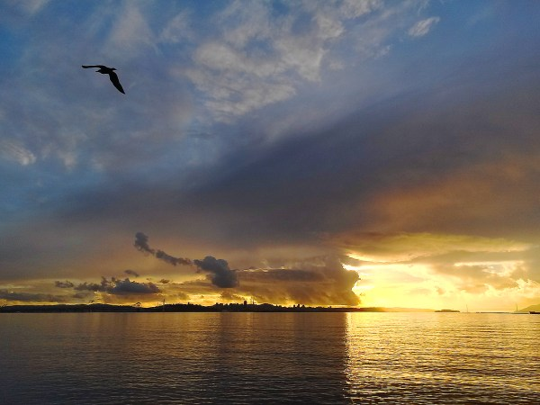 San Francisco Bay seen from the east after a storm with a bird flying and vibrant yellow and orange sky colors.