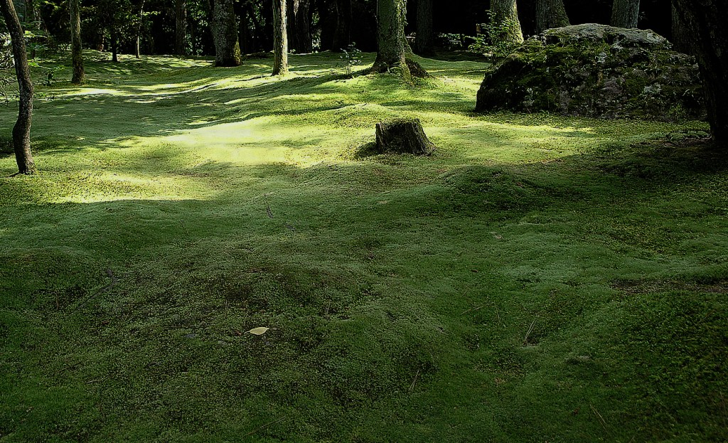 Deep green field of soft moss in a wooded area at the Ryoanji Temple, Kyoto Japan
