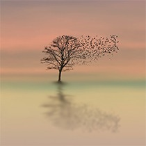 NLP and Mindfulness 1