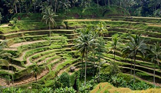 Training in Ubud Bali 1