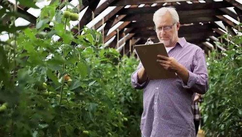 Assistenza compilazione domanda di disoccupazione agricola