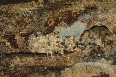 Lattiakannattimen pinnassa kasvaa runsaasti hometta