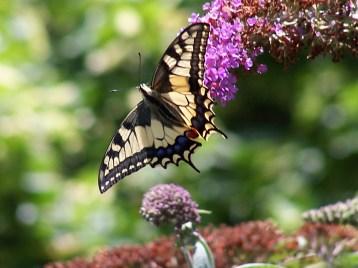 Serre aux Papillons -Honfleur