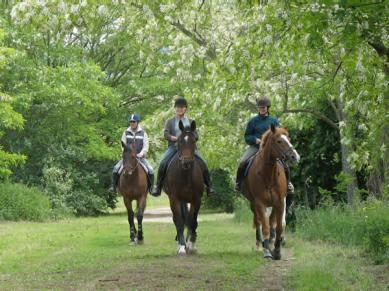 Le Clos de la Risle - Equitation au Bec
