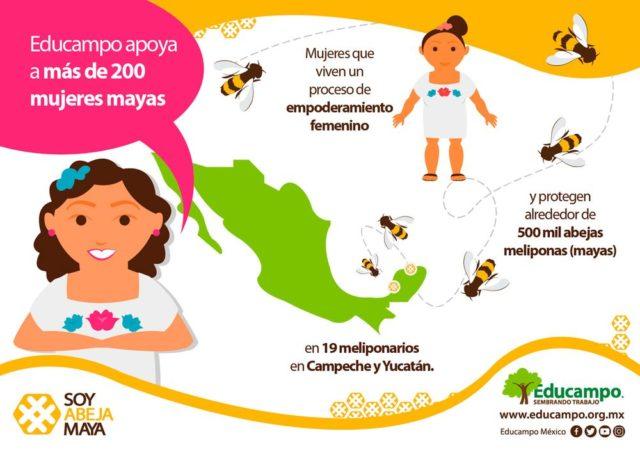 Image result for Mujeres mayas salvan a las abejas y se convierten en empresarias