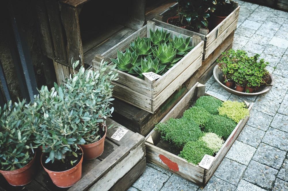 Pot Plant Soil