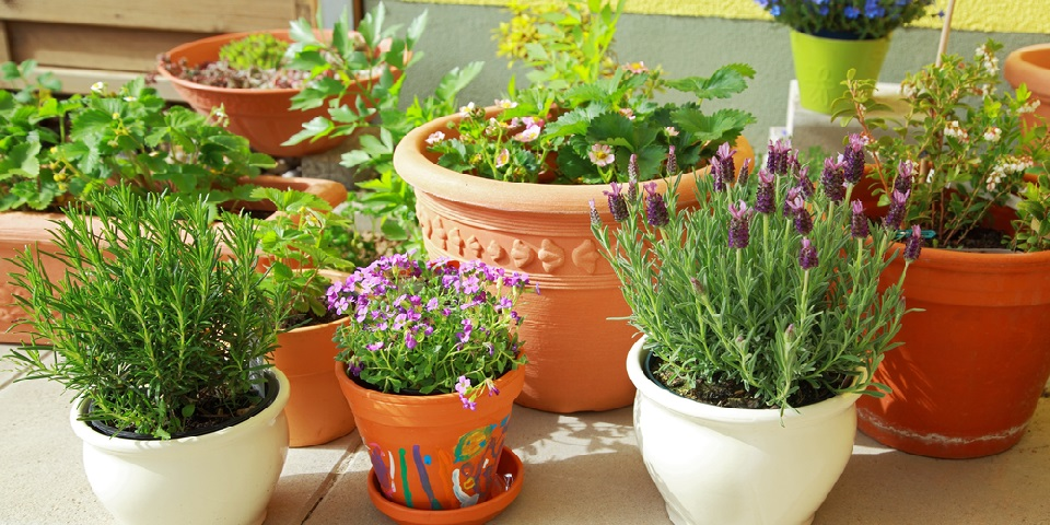Pots Plan For Terrace and Garden