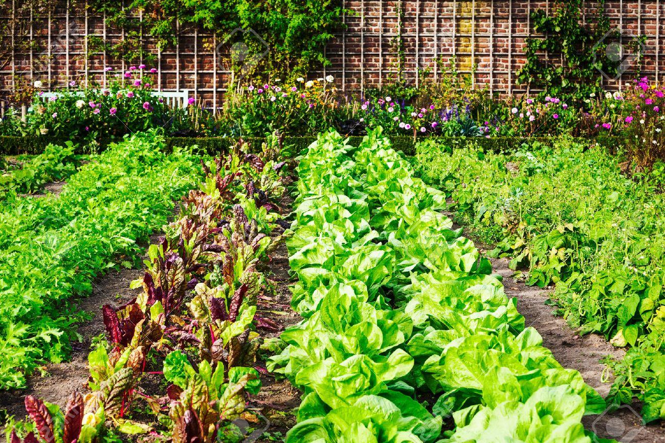 Vegetable Home Garden