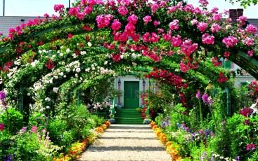 beautiful garden with rose