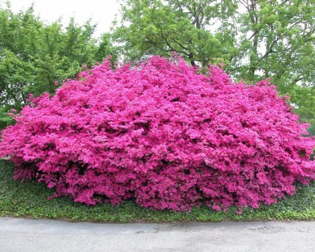 landscaping design with shrubs inspiration