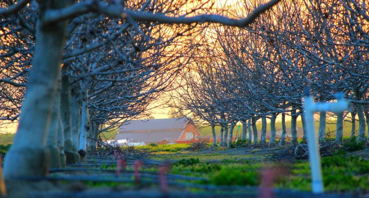 best landscaping ideas desert