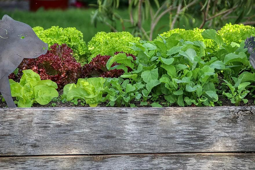 garden salad raised bed nutrition vegetables eat bio gardening food