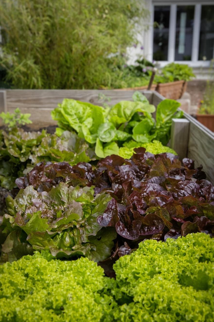 urban gardening locavore regional bio healthy salad vegetables local cultivation 1