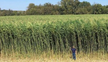 Industrial Hemp Farm