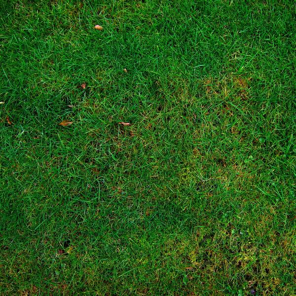Free Grass Textures (1)