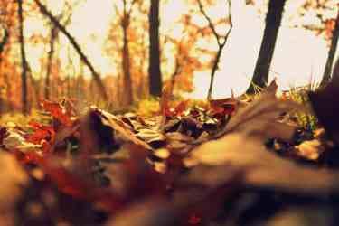 Inspiring Autumn Quotes
