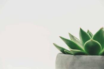 botanical cactus close up decor