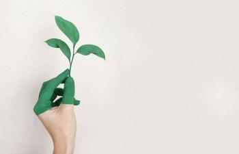 hand holding green leaf plant