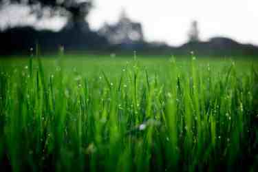 Green grass with morning dew on it