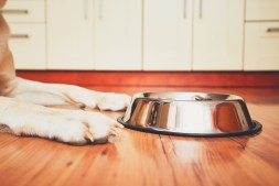 8 Vet-Approved Tips To Trick Your Pets into Taking Their Medicine