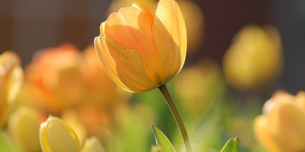 Spring vision