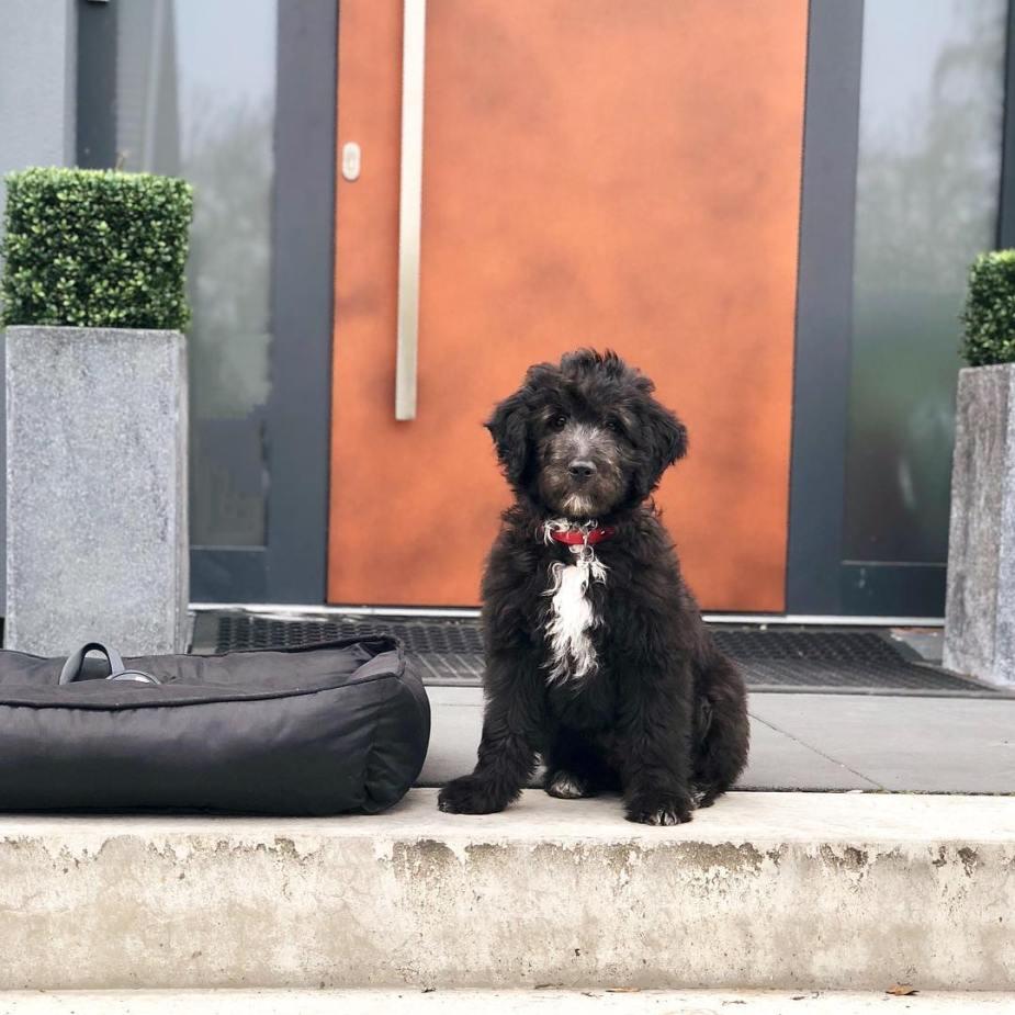 Jax, het hondje van Manon