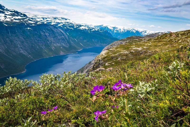 Paysage verdoyant avec fleurs mauves lacs d'altitude et sommets enneigés