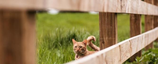 chat fixant l'ouverture d'une palissade en bois