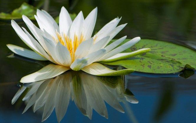 pretty flower names  flower, Beautiful flower