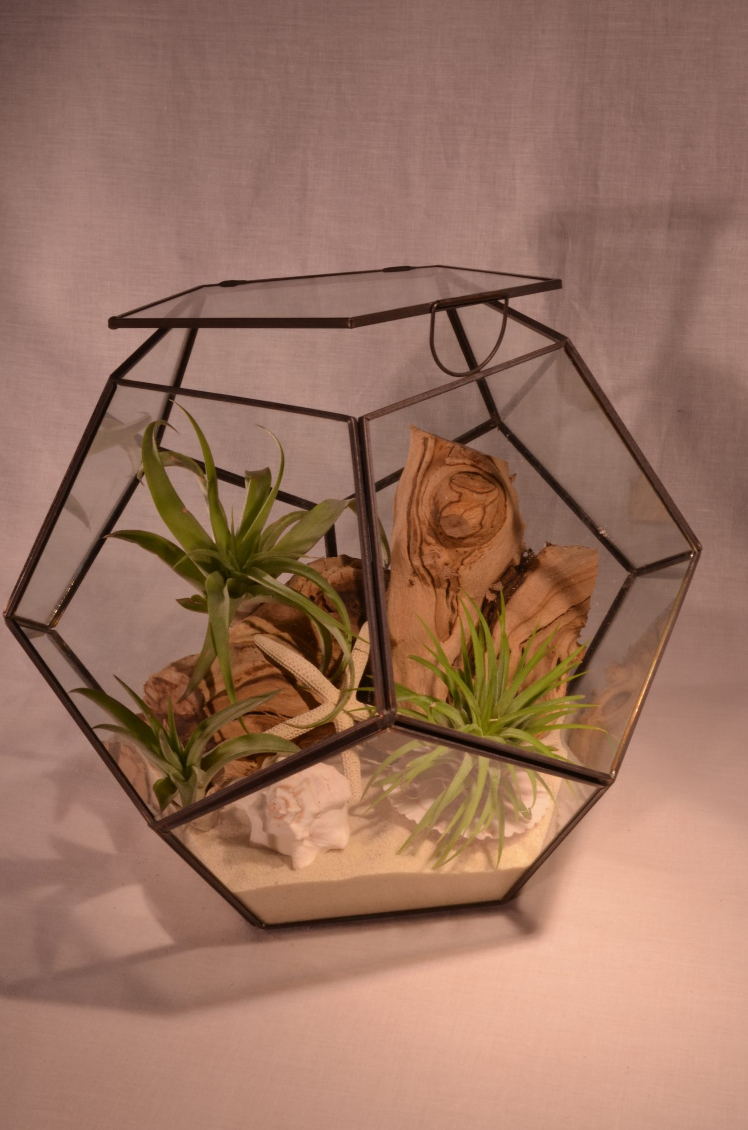 Large Terrarium Kit With 3 Air Plants Inspired Enterprise