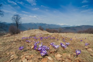 Весняні Карпати
