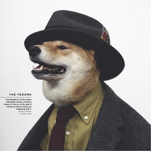 Menswear Dog_08