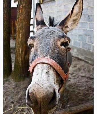 Yep, I Said the Donkey Is Talking