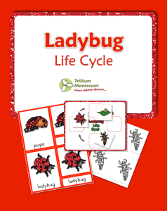 lady bug life cycle printable