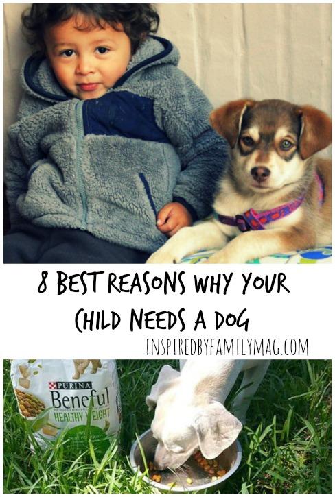 kid needs dog