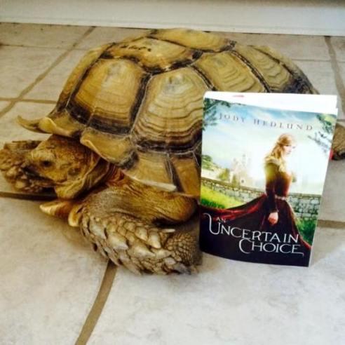 Amanda Geaney's tortoise
