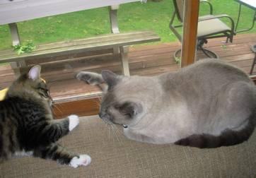 Mojo & Mr. Skittles